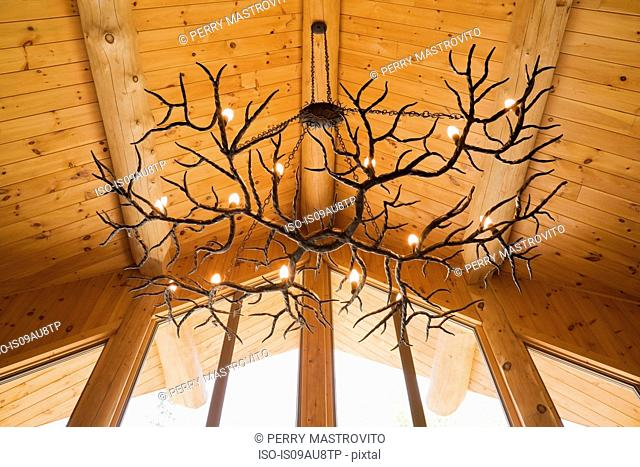 Antler chandelier hanging from Eastern white pine vaulted ceiling in log cabin
