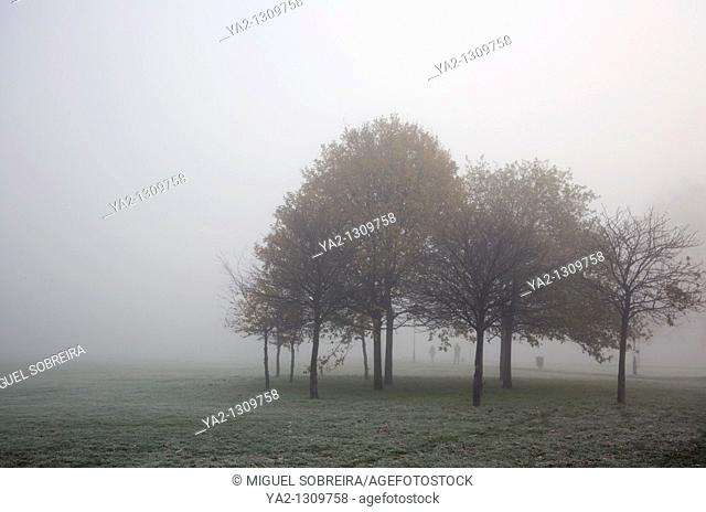 Foggy Clapham Common