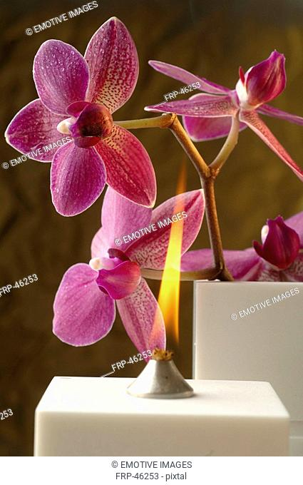Aroma oil lamp and orchid blossoms
