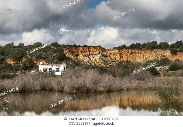 Natural Area Dehesa de Abajo. La Puebla de Río Sevilla. Andalusia. Spain