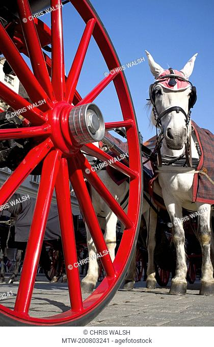 Coach wheel red white horse Vienna carriage
