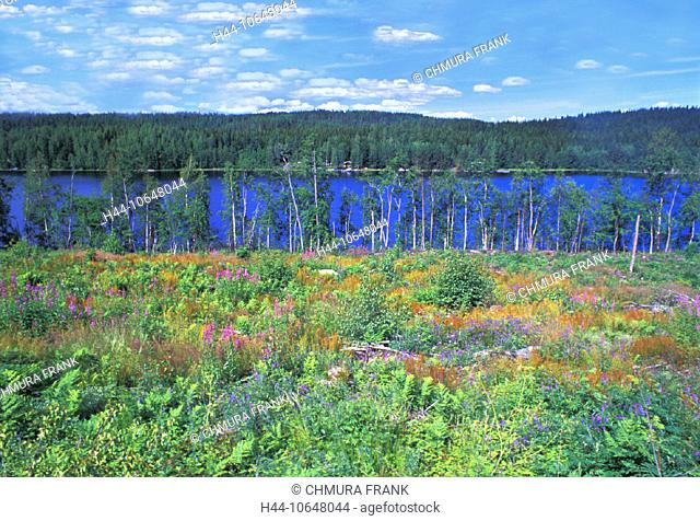 10648044, flowers, flower meadow, Finland, scenery, coniferous forest, nature, Punkaharju, Saimaa, lake, sea, wood, forest, me