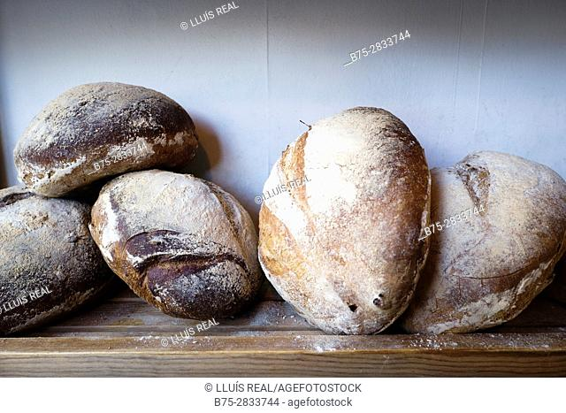 Close up of three ecological breads in a bakery. Sedbergh, Cumbria, West Riding os Yorkshire, Yorkshire Dales, England, UK