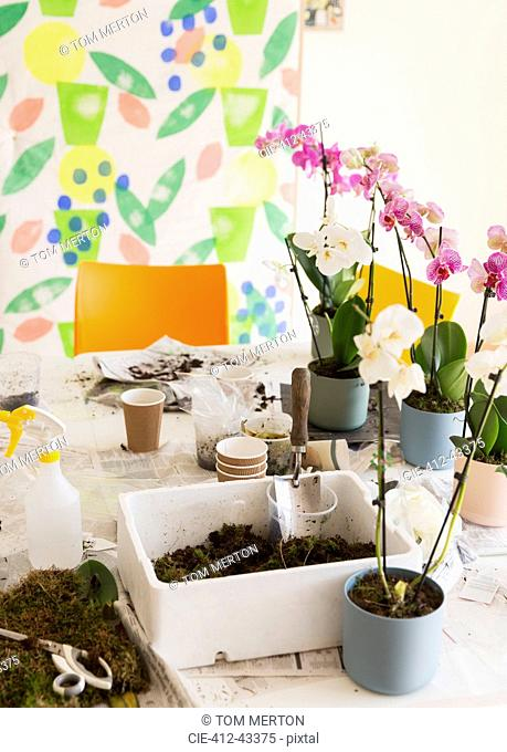 Orchids and potting soil on flower arranging class table