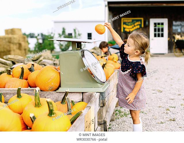 Young girl standing at a table with pumpkins at a farm stall, placing small pumpkin on weighing scales