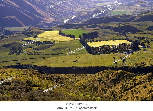 New Zealand, South-island, Central Otago, Kawarau-Valley, field-landscape, destination, landscape, valley, river, view, hills, mountains, fields, meadows, trees