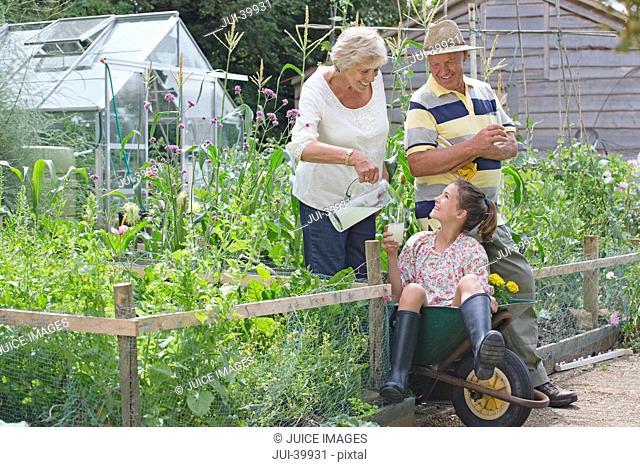 Granddaughter Sitting In Garden Wheelbarrow With Grandparents