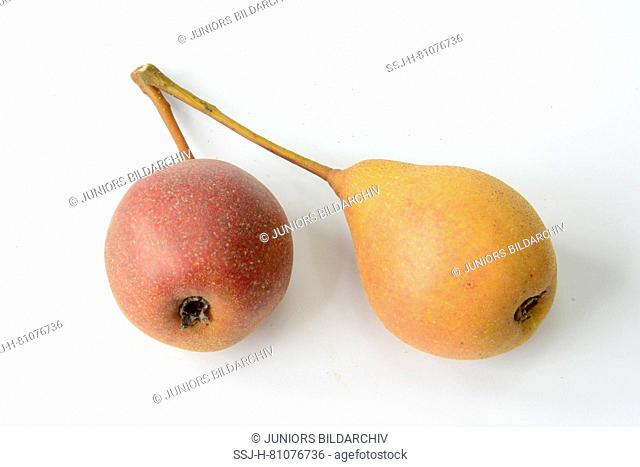 European Wild Pear (Pyrus pyraster). Two ripe fruit. Studio picture against a white background. Germany