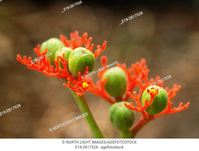 USA, Hawaii, Honolulu. Close-up of unusual tropical flower