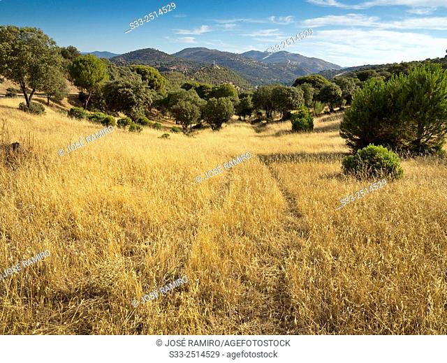 Labores hill in Pelayos de la Presa. Madrid. Spain. Europe