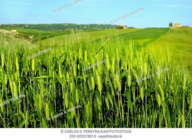 Countryside landscape around Pienza Tuscany Italy