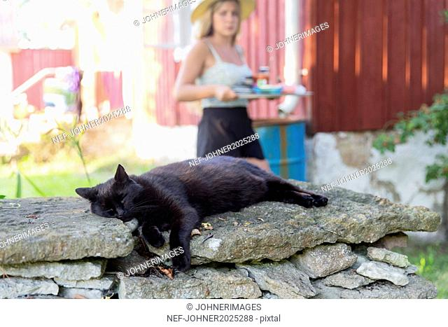 Cat sleeping on stone wall, young woman on background