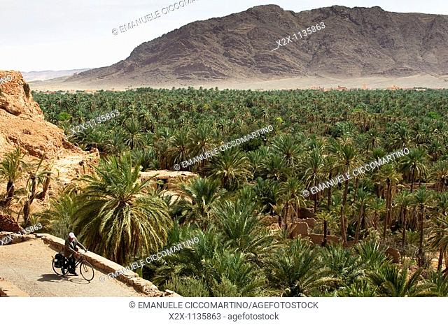 Moroccan man riding, Date Palm oasis and Jorf mountain, Figuig, province of Figuig, Oriental Region, Morocco
