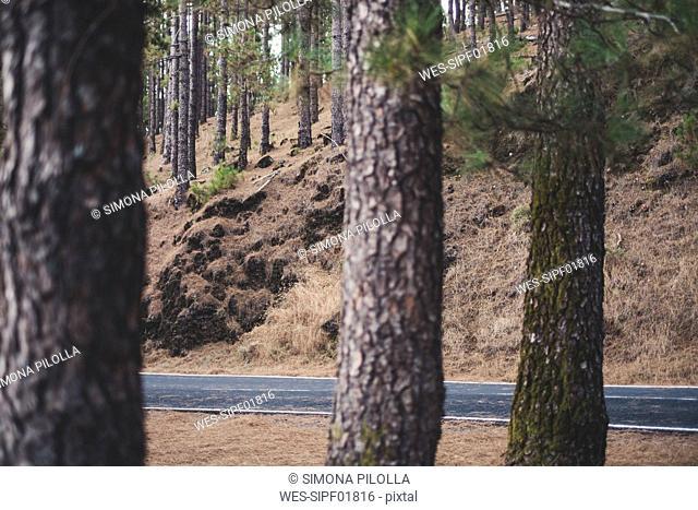 Spain, Tenerife, Corona Forestal Nature Park, empty road