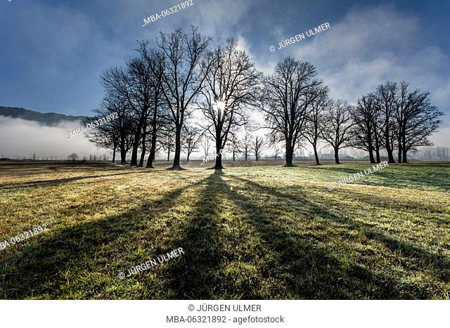 Group of trees, bright light, fog, blue sky, shade