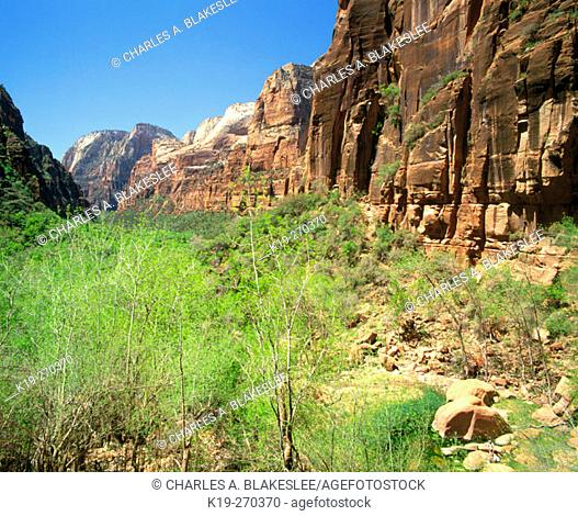 Zion Canyon from Weeping Rock. Zion National Park. Utah. USA