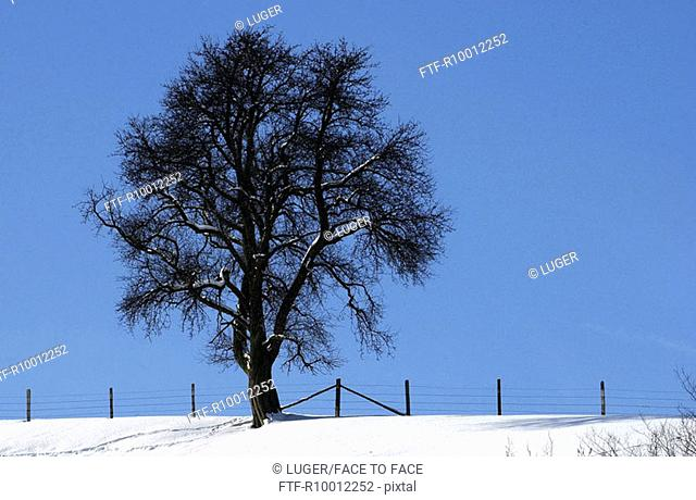 Bare tree on a meadow in winter