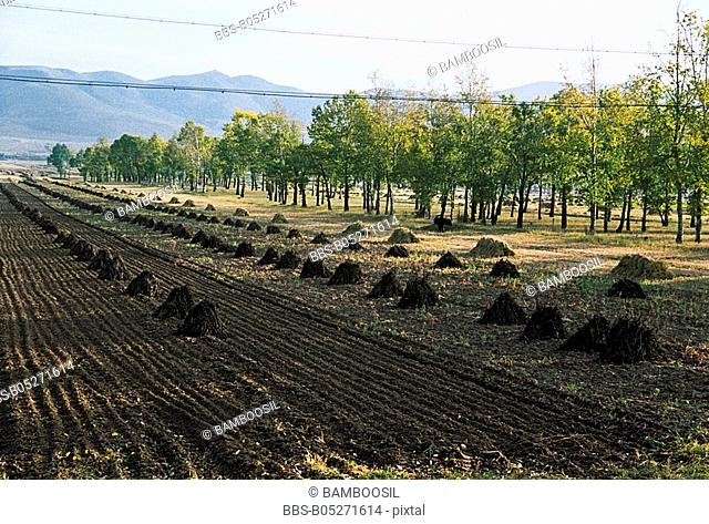 Tilled farmland, Saibei, Guyuan County, Hebei Province of People's Republic of China