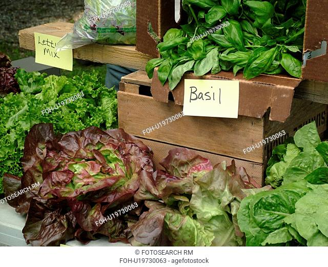 Montpelier, VT, Vermont, Farmer's Market, Basil, Lettuce