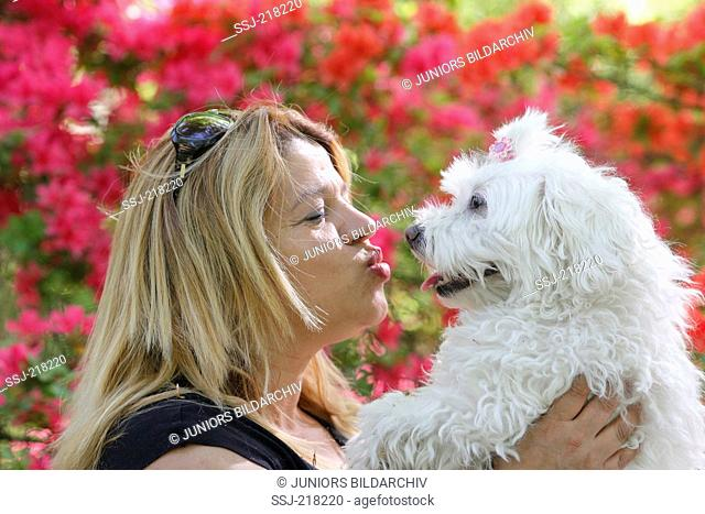 Woman kissing Maltese dog. Germany