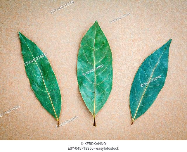 Dried bay leaf on the brown background, 3 Bay leaves background. Bay laurel on brown background