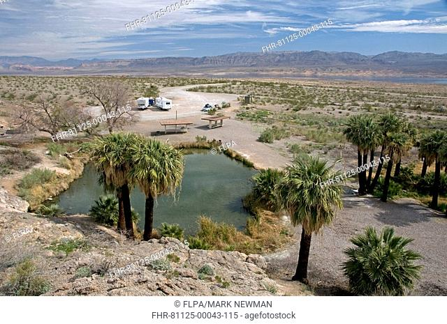 View of geothermal spring in desert, with tourist vehicles, Roger's Spring, Lake Mead National Recreation Area, Nevada, U S A