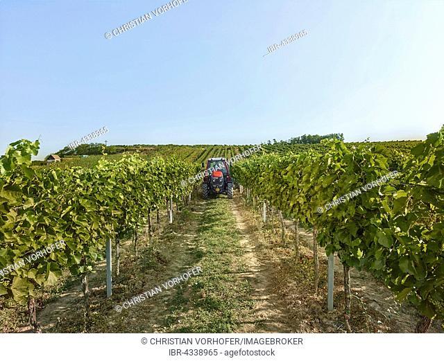 Tractor driving between the vines, Wieselburg, Lower Austria, Austria