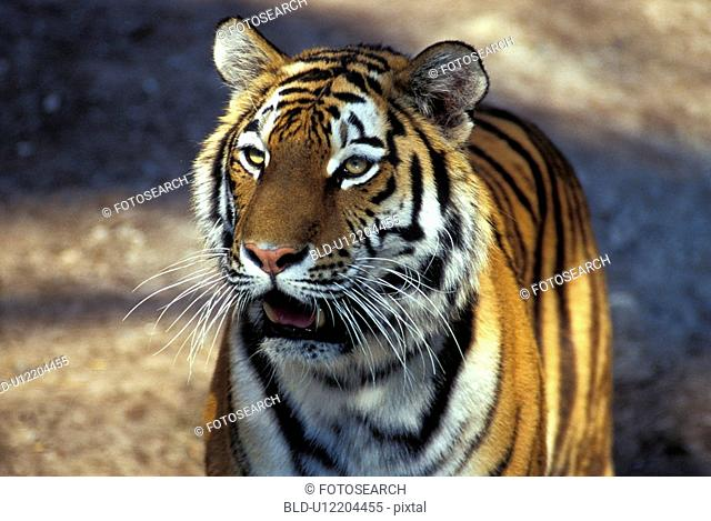 animal, animals, aichner