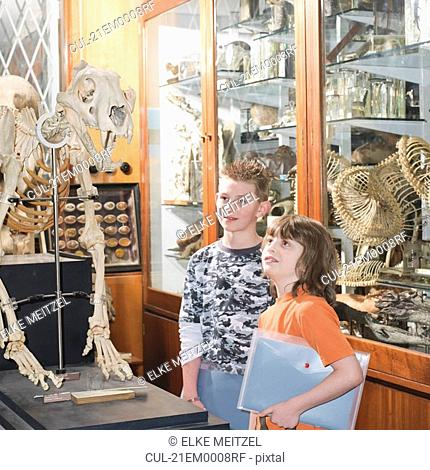 2 boys looking at tiger skeleton