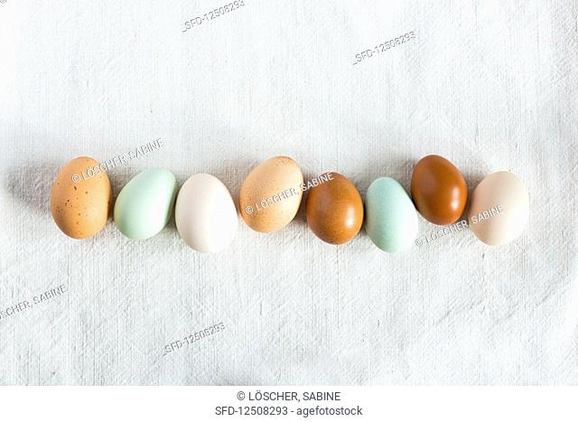 A row of nest eggs on a white linen tablecloth