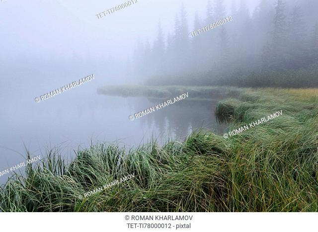 Forest Lake and trees in fog