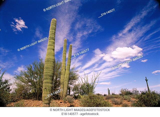 Desert vegetation. Casa Grande. Arizona. USA