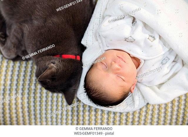 Newborn baby girl sleeping on the couch next to a gray cat