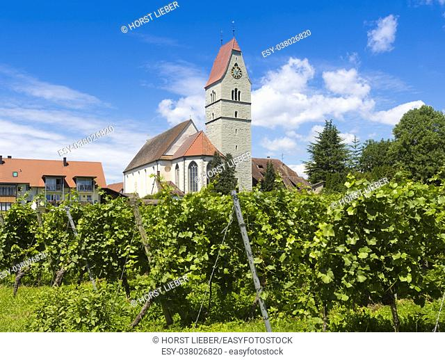 Catholic Church St. Johann Baptist in Hagnau at Lake Constance with vitaceous in the foreground - Hagnau, Lake Constance, Baden-Wuerttemberg, Germany, Europe