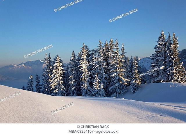 Winter on the Wallberg with view to the Mangfall mountains, Rottach-Egern, Upper Bavaria, Bavaria, South Germany, Germany
