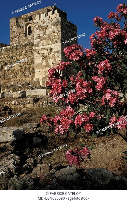 Medieval city - Crusaders' castle