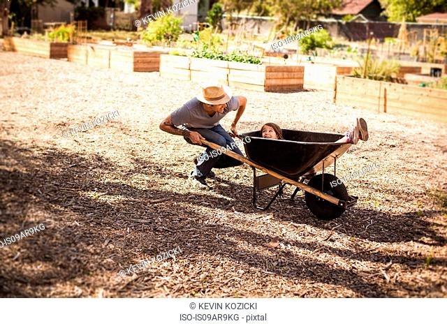 Mid adult man in community garden with daughter riding in wheelbarrow