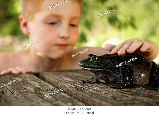 Young Boy Observes Large Bullfrog On The Dock on a Lake