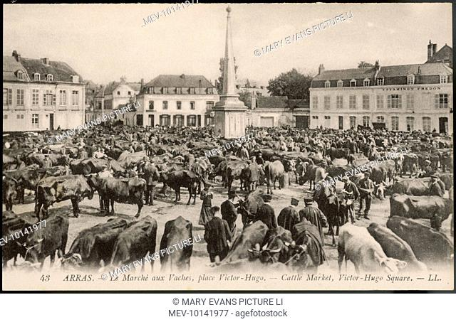The cattle market in the Place Victor Hugo, Arras, northern France