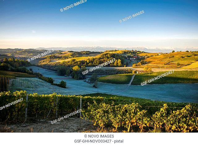 Vineyards with Frosted Fields and Mountain Landscape at Sunrise, Dogliani, Piedmont, Italy