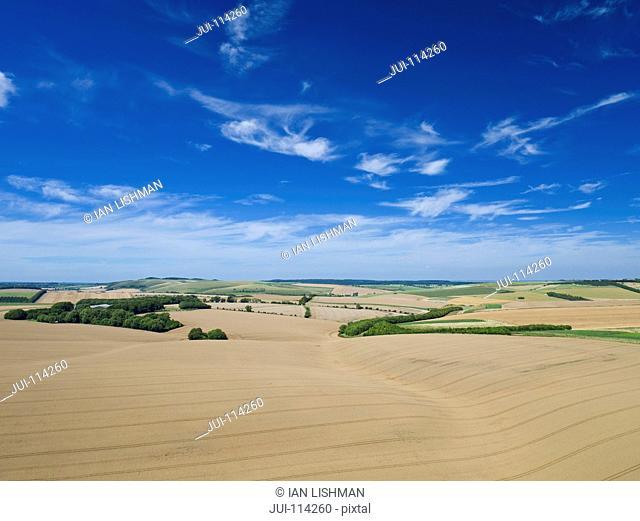 Aerial View Of Oat Crop Growing In Field