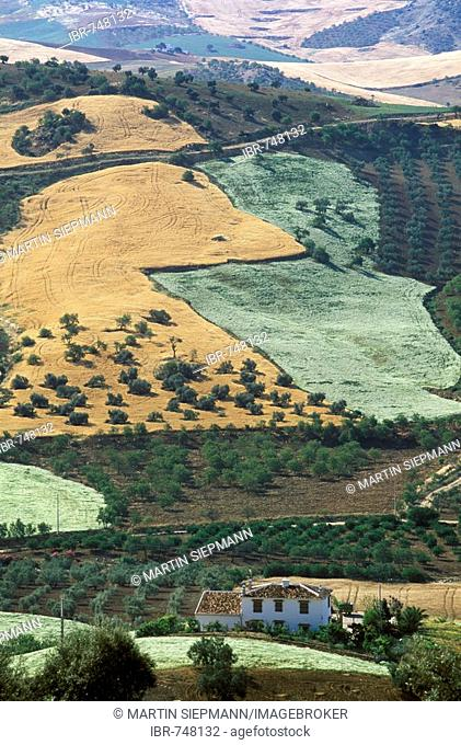 Cultivated Landscape Valle De Abdalajis Mlaga Province Andalusia Spain