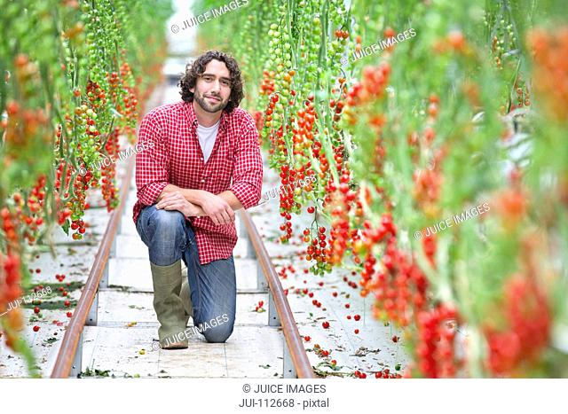 Portrait confident worker between rows of vine tomato plants in greenhouse