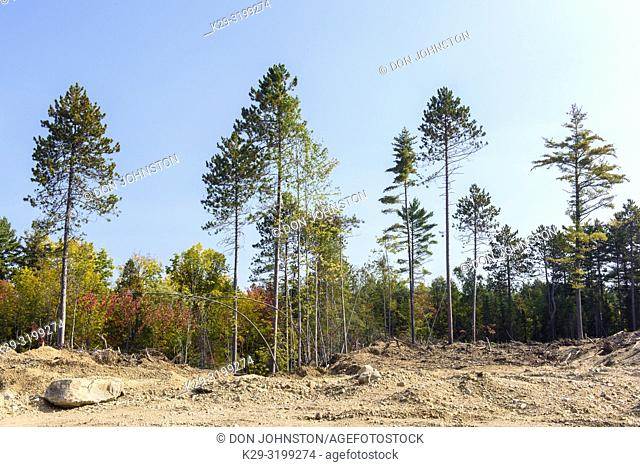 Forestry operation aftermath in Algonquin Provincial Park, Algonquin Provincial Park, Nipissing Township, Ontario, Canada