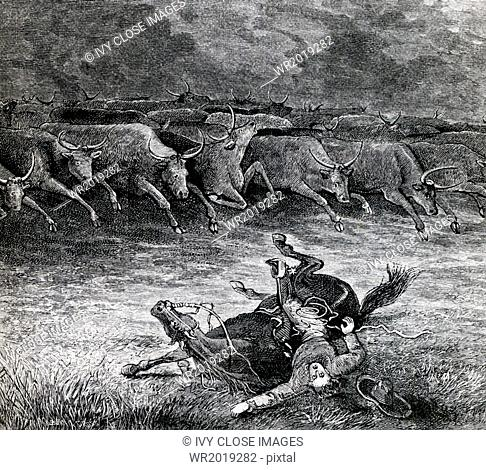 Cowboys played an important rle in the cattle business in the west in the second half of the 1800s. A stampede of cattle may be brought on by the most trivial...