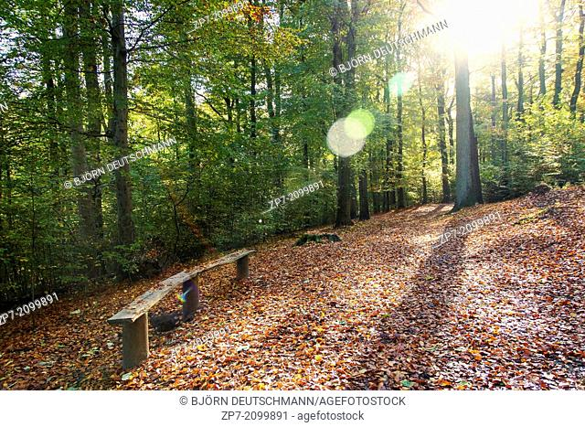 An autumn landscape in a forest in Kiel