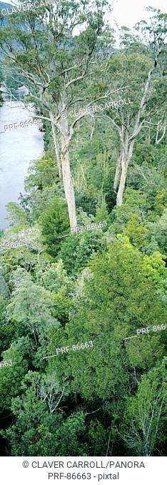 Tahune Forest Reserve Tasmania Australia