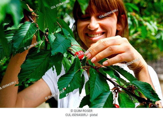 Mid adult woman picking cherry from cherry tree, smiling