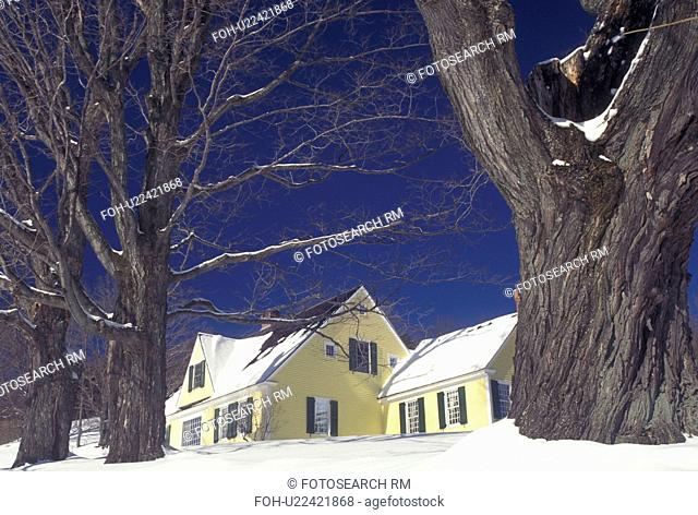 Vermont, Pomfret, VT, Yellow house surrounded by large maple trees, blue sky, daylight, snow, winter