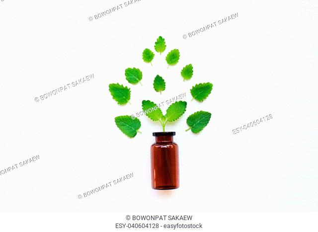 A bottle of melissa lemon balm essential oil with fresh leaves. Top view